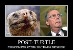 MITCH MCCONNELL - TURTLE MAN